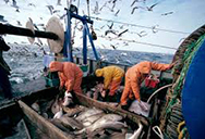 S&Ds North Sea Plan must provide for sustainable fisheries and conservation