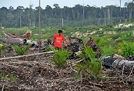 S&Ds call for sustainable palm oil to stop deforestation, mitigate climate change and save endangered species, exploited plantation workers, including children, Paul Brannen, Miriam Dalli,