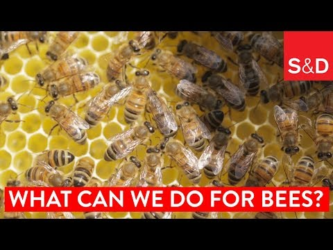 Embedded thumbnail for What Can We Do for Bees?